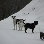 hameau-des-bulls (2)