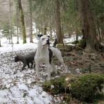 hameau-des-bulls (5)