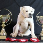 Hummer Meilleur Bully junior Suede 2012