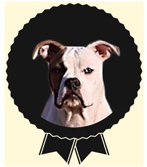 Jo, Bulldog Américain