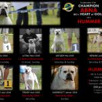 portrait hummer champion